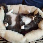 关于猫咪不同于其他宠物的原因,看看这些证据就知道了。