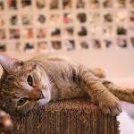 关于『猫』肢体语言的七个知识点,身为铲屎官必须清楚了解