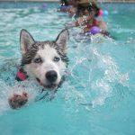 不同星座如果与狗狗对应,那么你的星座是哪一种狗狗呢?