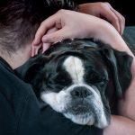 这十件主人常常做的事,却是狗狗不喜欢的。你中了几个?